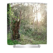 Sun Shining Through Trees In A Mysterious Forest Shower Curtain
