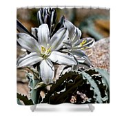 Sun Soaked Desert Lily Shower Curtain