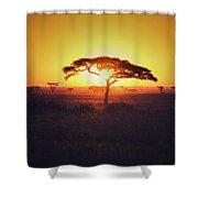 Sun Through Acacia Shower Curtain