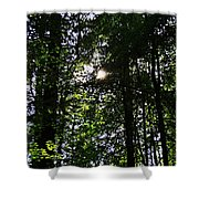 Sun Through Trees In Forest Shower Curtain