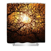 Sun Tree Shower Curtain