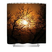 Sun Trees Shower Curtain