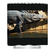 Sunbathing Gator Shower Curtain