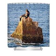 Sunbathing Sea Lion Shower Curtain