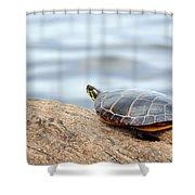 Sunbathing Turtle Shower Curtain
