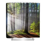 Sunbeams Along Hiking Trails Shower Curtain
