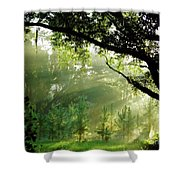Sunbeams In The Forest Shower Curtain