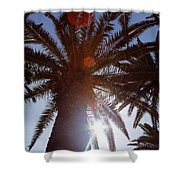 Sunbeams Through The Palms Shower Curtain