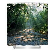 Sunbeams Through Trees Shower Curtain