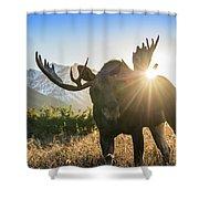 Sunburst In The Antlers Shower Curtain