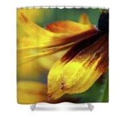 Sunburst Petals - 2 Shower Curtain