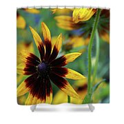 Sunburst Petals Shower Curtain