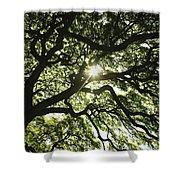 Sunburst Through Tree Shower Curtain