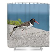 Sunday Stroll Shower Curtain