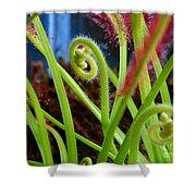 Sundew Drosera Capensis 3 Shower Curtain