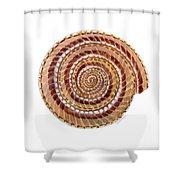 Sundial Shell Shower Curtain