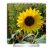 Sunflower 12 Shower Curtain