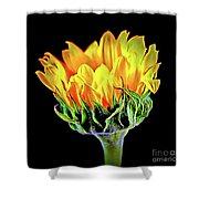 Sunflower 18-15 Shower Curtain