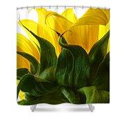 Sunflower 2015 2 Shower Curtain