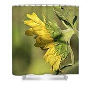 Sunflower 2016-1 Shower Curtain