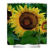 Sunflower 2017 9 Shower Curtain