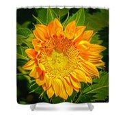 Sunflower 6 Shower Curtain
