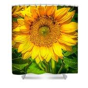 Sunflower 7 Shower Curtain