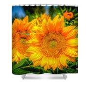 Sunflower 9 Shower Curtain