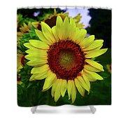 Sunflower After A Summer Rain Shower Curtain