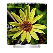 Sunflower Along Etiwanda Falls Trail In San Gabriel Mountains-california  Shower Curtain