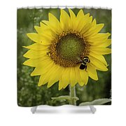 Sunflower Among The Weeds Shower Curtain