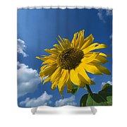 Sunflower And Blue Sky Shower Curtain