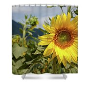 Sunflower And Peaks Of Otter Shower Curtain