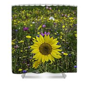 Sunflower And Wildflowers Shower Curtain