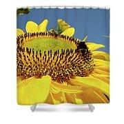 Sunflower Art Prints Honey Bee Sun Flower Floral Garden Shower Curtain