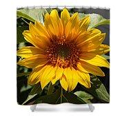 Sunflower Art- Summer Sun- Sunflowers Shower Curtain