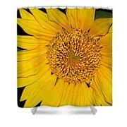 Sunflower At Dusk Shower Curtain