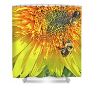 Sunflower Bees Shower Curtain