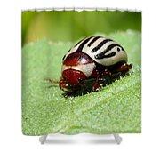 Sunflower Beetle Shower Curtain