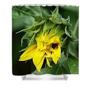 Sunflower Bud Shower Curtain