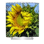 Sunflower By Design Shower Curtain