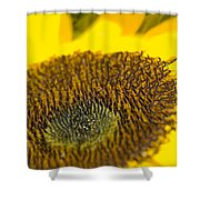 Sunflower Close-up Shower Curtain