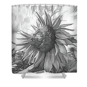 Sunflower Dawn Black And White Drawing Shower Curtain