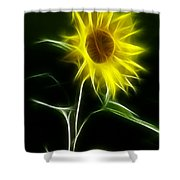 Sunflower Display Shower Curtain