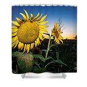 Sunflower Evening Shower Curtain