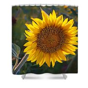 Sunflower - Facing East Shower Curtain