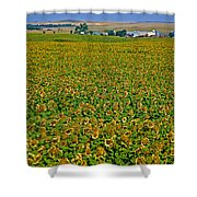 Sunflower Farm In Northwest North Dakota  Shower Curtain