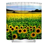 Sunflower Field Shower Curtain