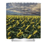Sunflower Fields Near Denver International Airport Shower Curtain