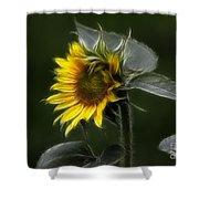 Sunflower Fractalius Beauty Shower Curtain